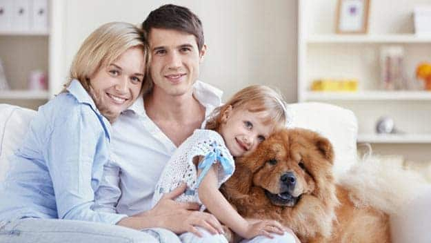Wills & Trusts dog-young-family Direct Wills Exeter